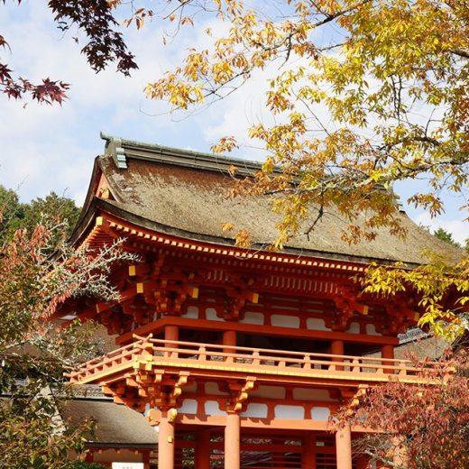 上賀茂神社の紅葉