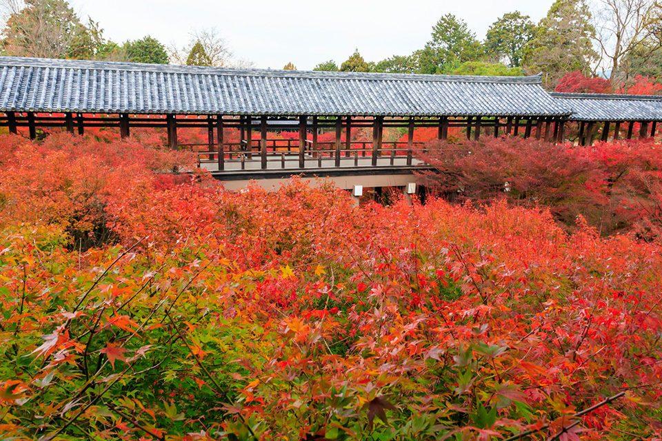 NO1: Tofuku-ji Temple, popular for the Tsuten Bridge