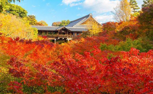東福寺通天橋の紅葉