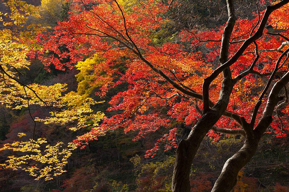 京都紅葉スポット