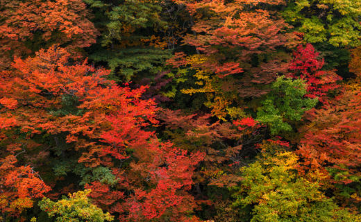 京都,東福寺,紅葉