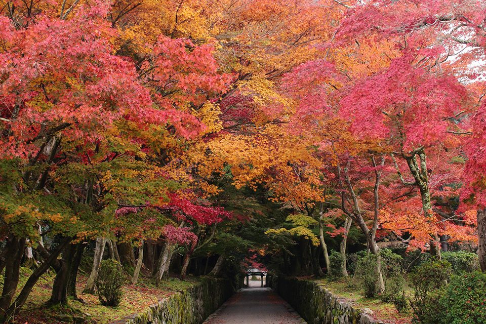 興聖寺琴坂の紅葉
