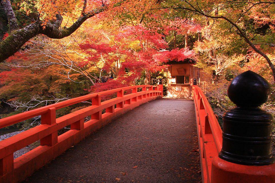 西明寺指月橋の紅葉