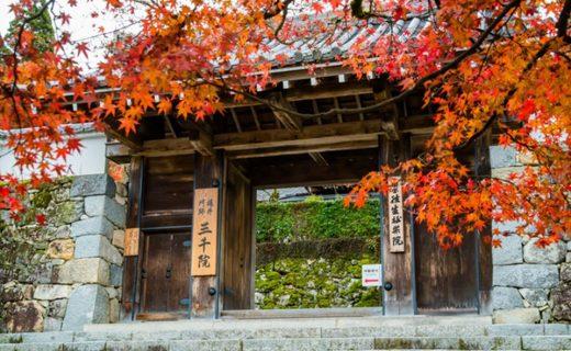 京都大原三千院の紅葉