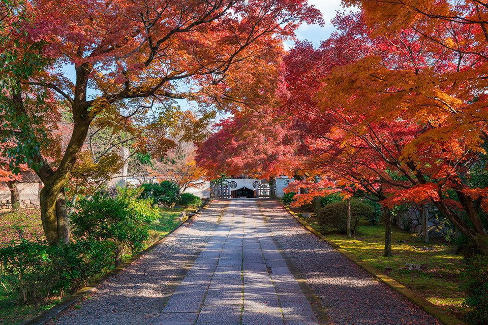 京都養源院の紅葉