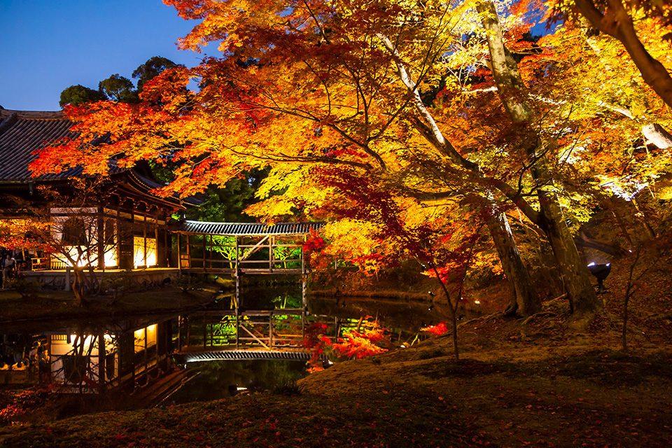 高台寺の紅葉ライトアップ2