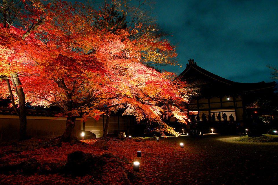 高台寺の紅葉ライトアップ3