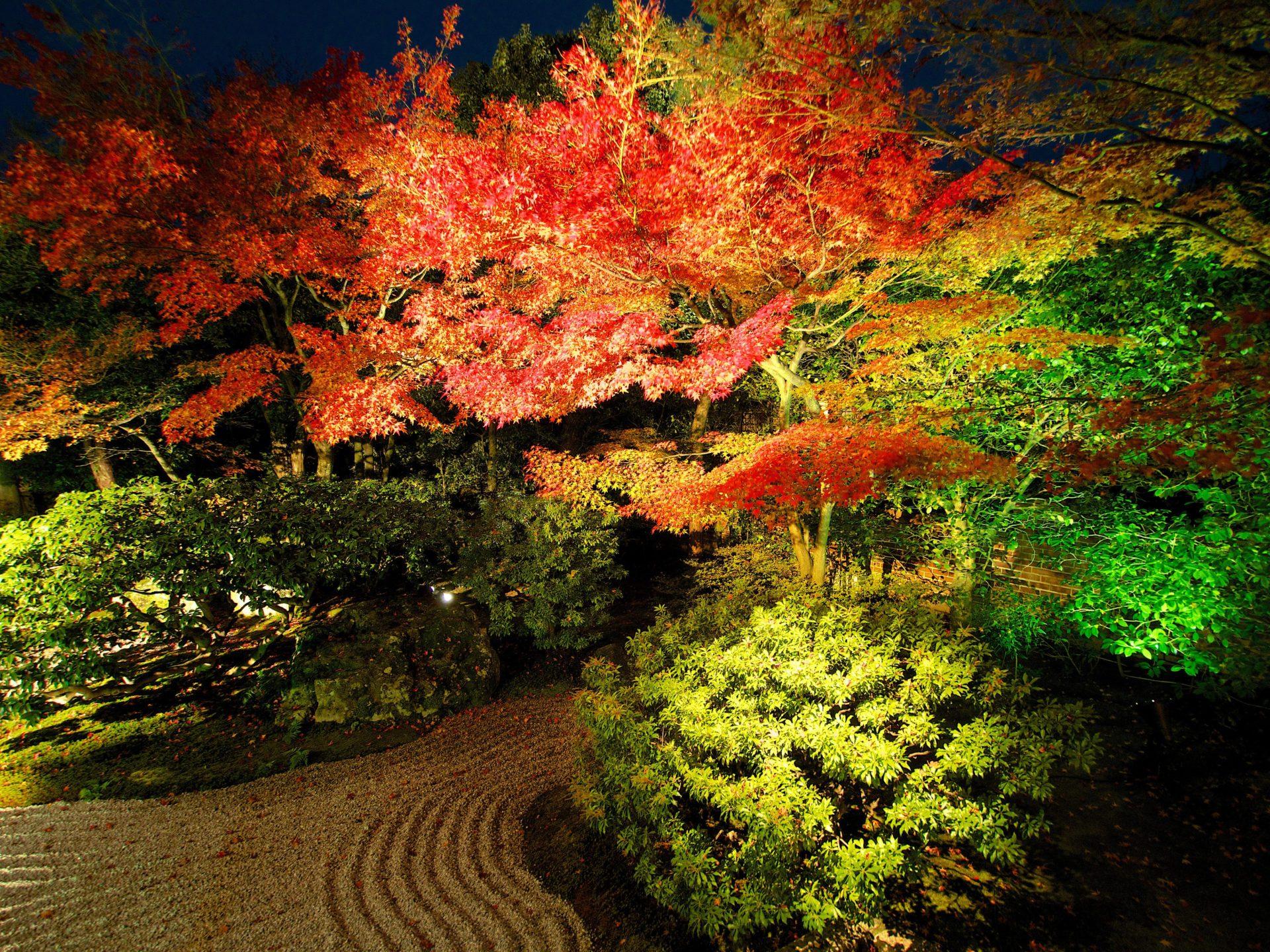 高台寺圓徳院の紅葉ライトアップ-1