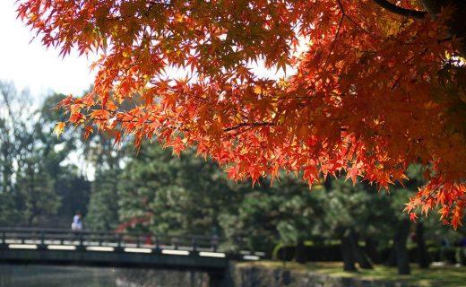 二条城の秋