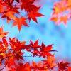 京都の紅葉-1