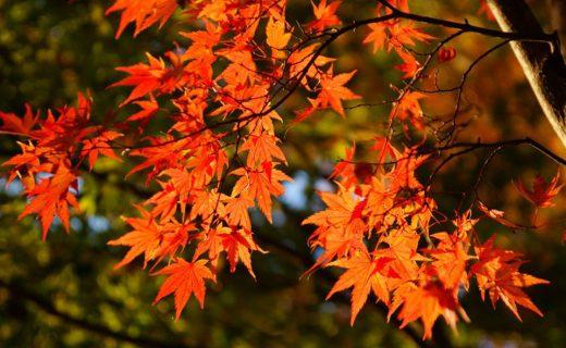 京都の紅葉-2