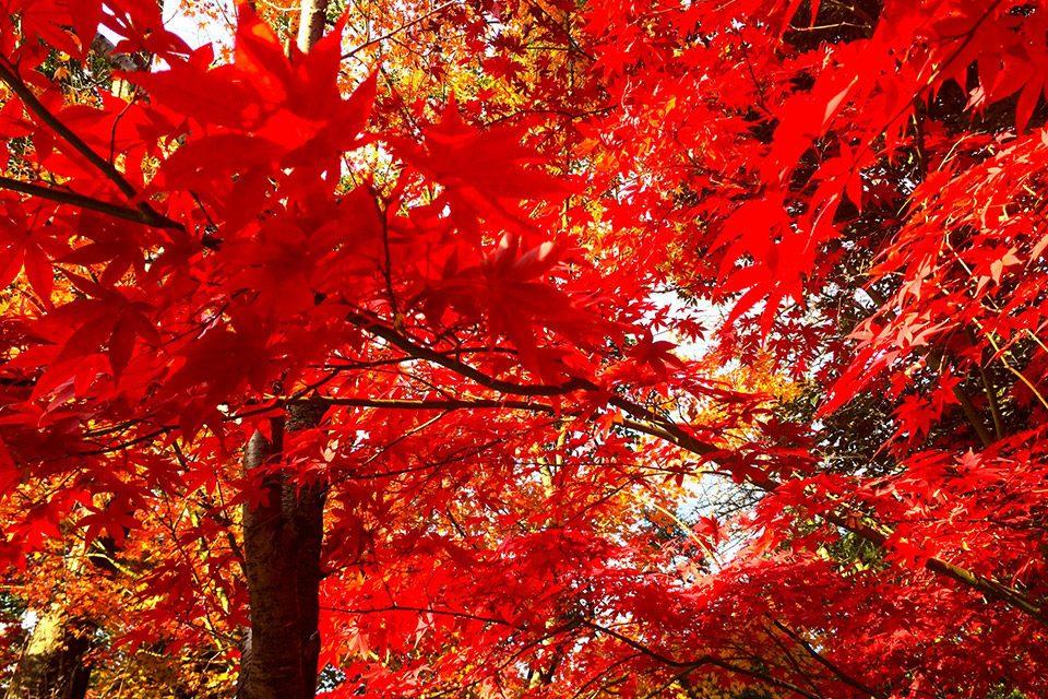 京都の紅葉-3