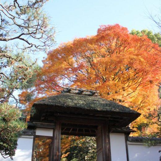 安楽寺山門の紅葉