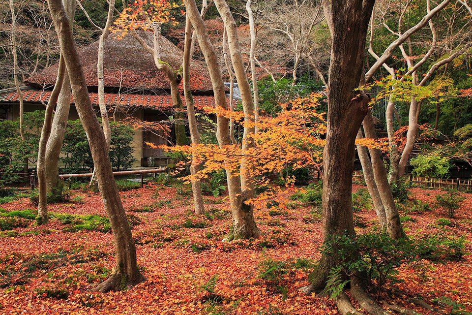 晩秋の祇王寺