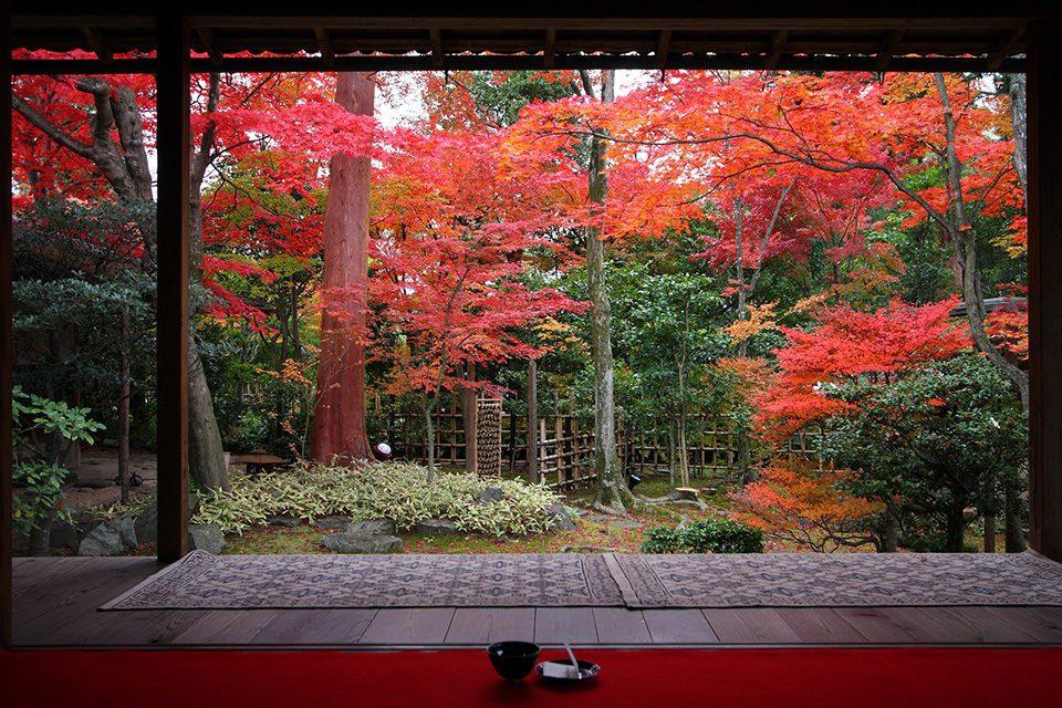 妙心寺大法院の紅葉