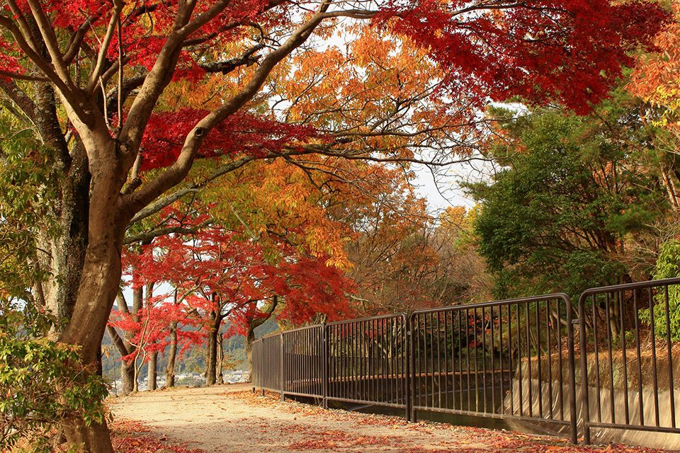 山科琵琶湖疏水の紅葉