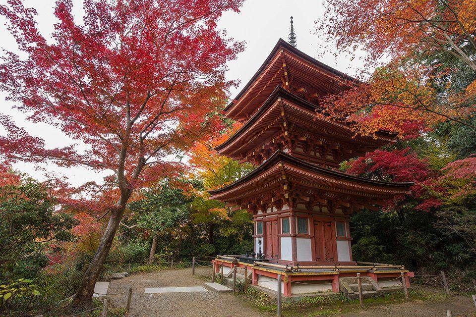 浄瑠璃寺の紅葉