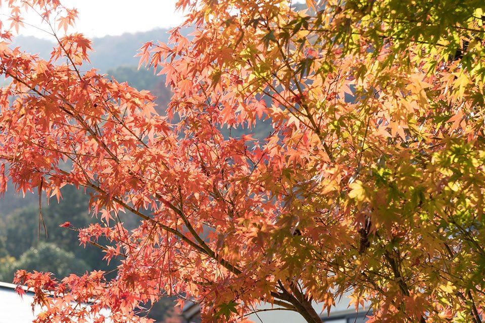 秋の京都嵐山-1