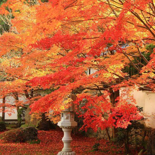 京都 秋 紅葉