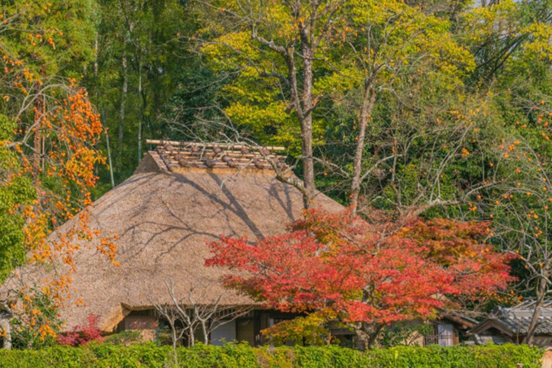 落柿舎の紅葉