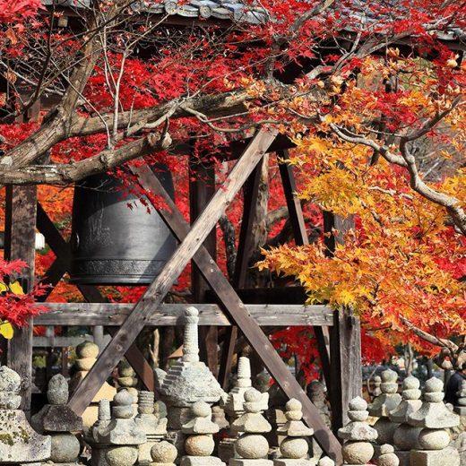kyoto_autumn_caedekyoto