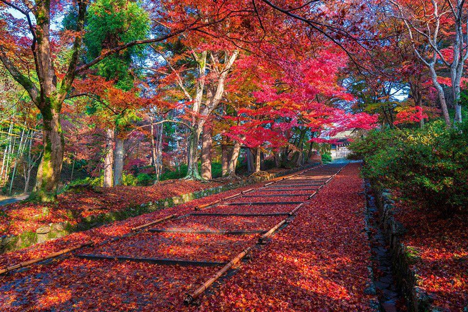 kyoto_koyo