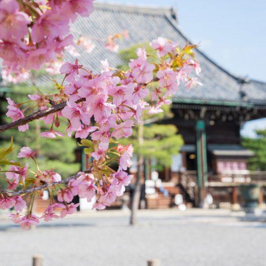 京都 櫻花 推薦套餐