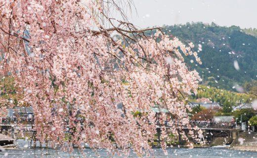 推薦在櫻花時節!京都的飯店