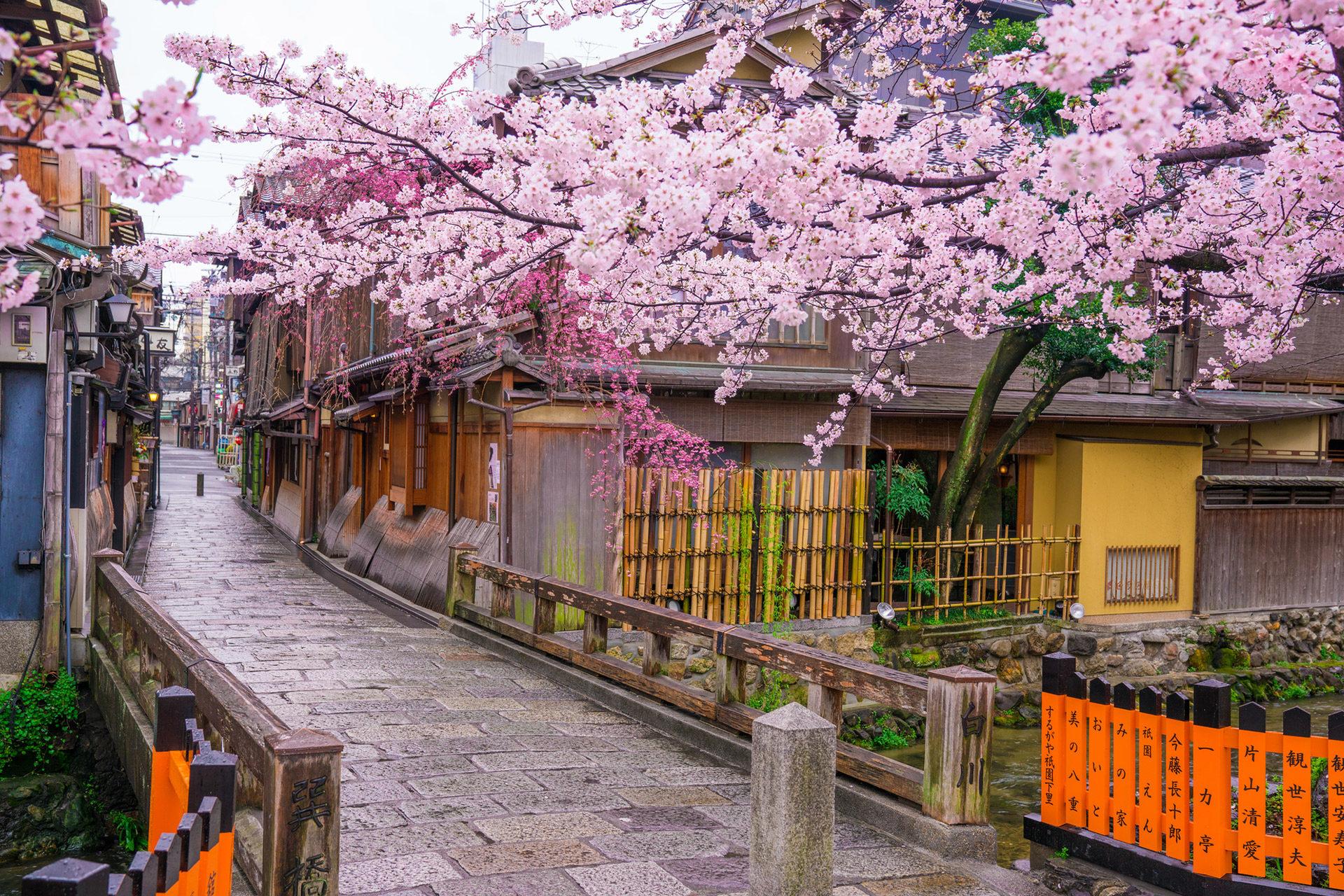京都  櫻花  午餐