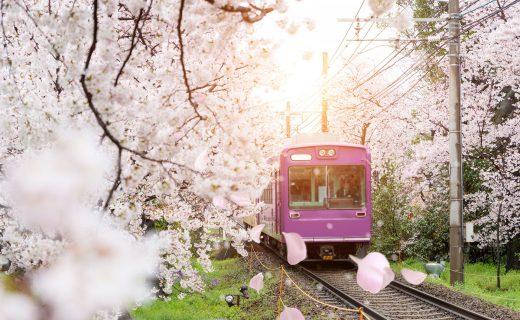 京都 櫻花 線路