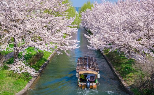 京都 櫻花 舟