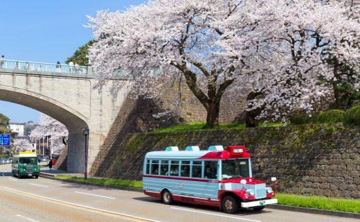 京都 櫻花 巴士旅行