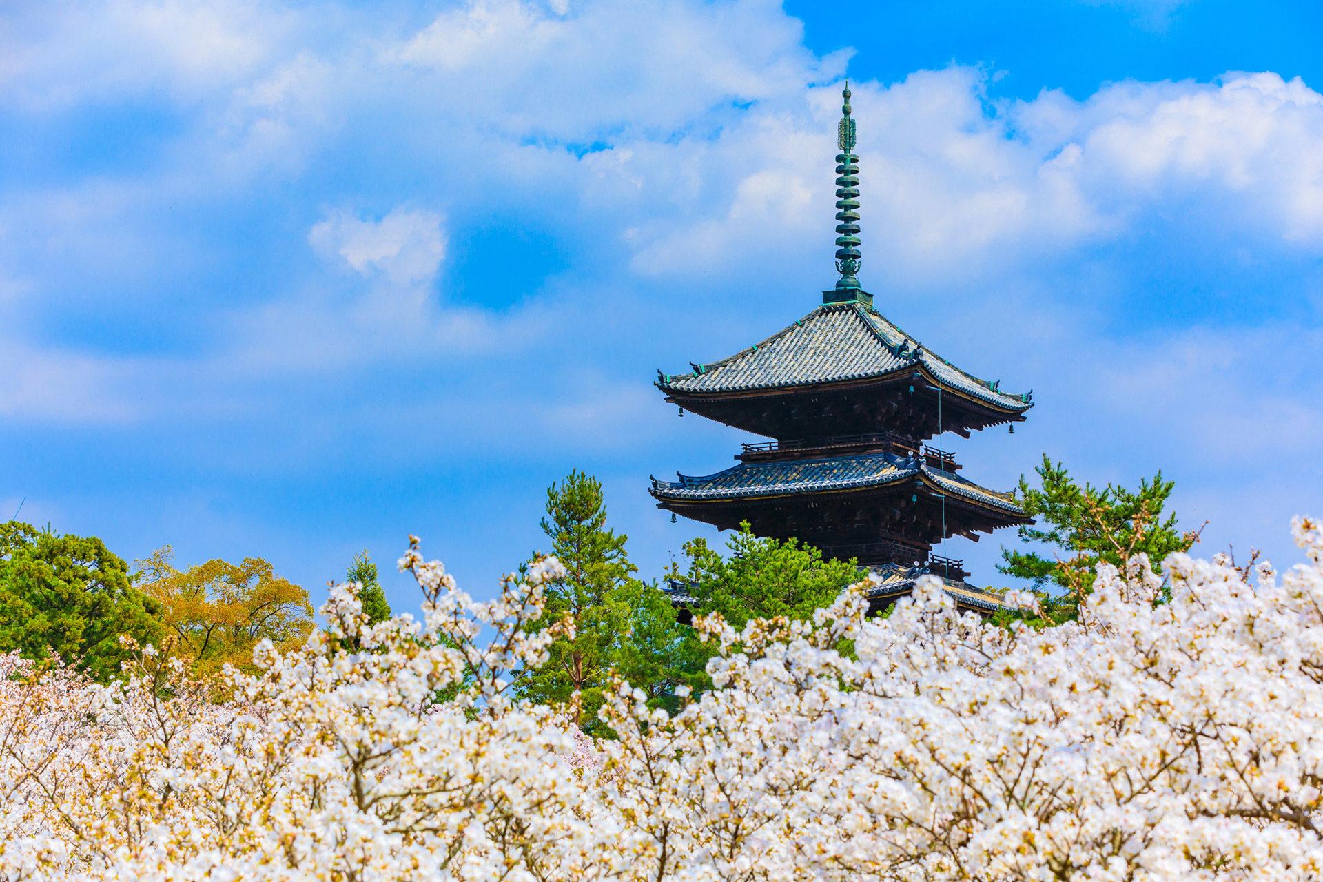 櫻花名勝 的地方