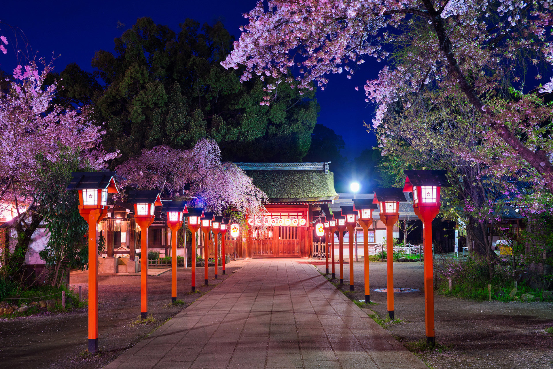 京都  櫻花  神社