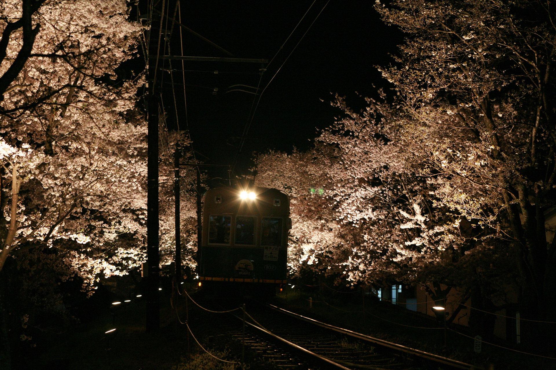 京都  櫻花  名勝