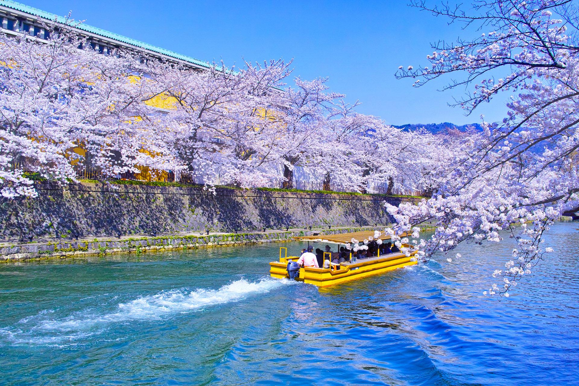 京都 櫻花 平安神宮