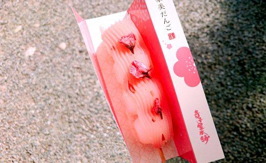 妝點京都春天的櫻花