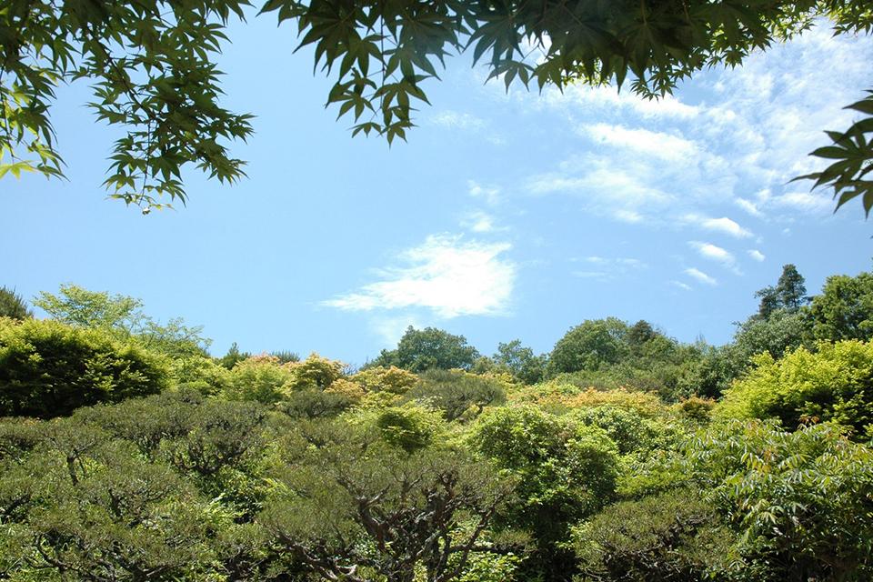 嵐山公園展望臺吧!