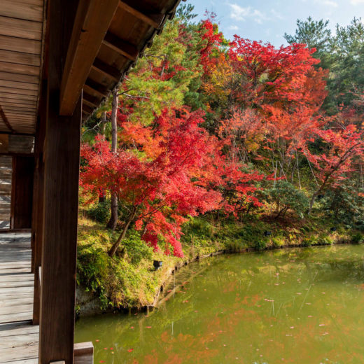 來京都享受秋天的約會吧。