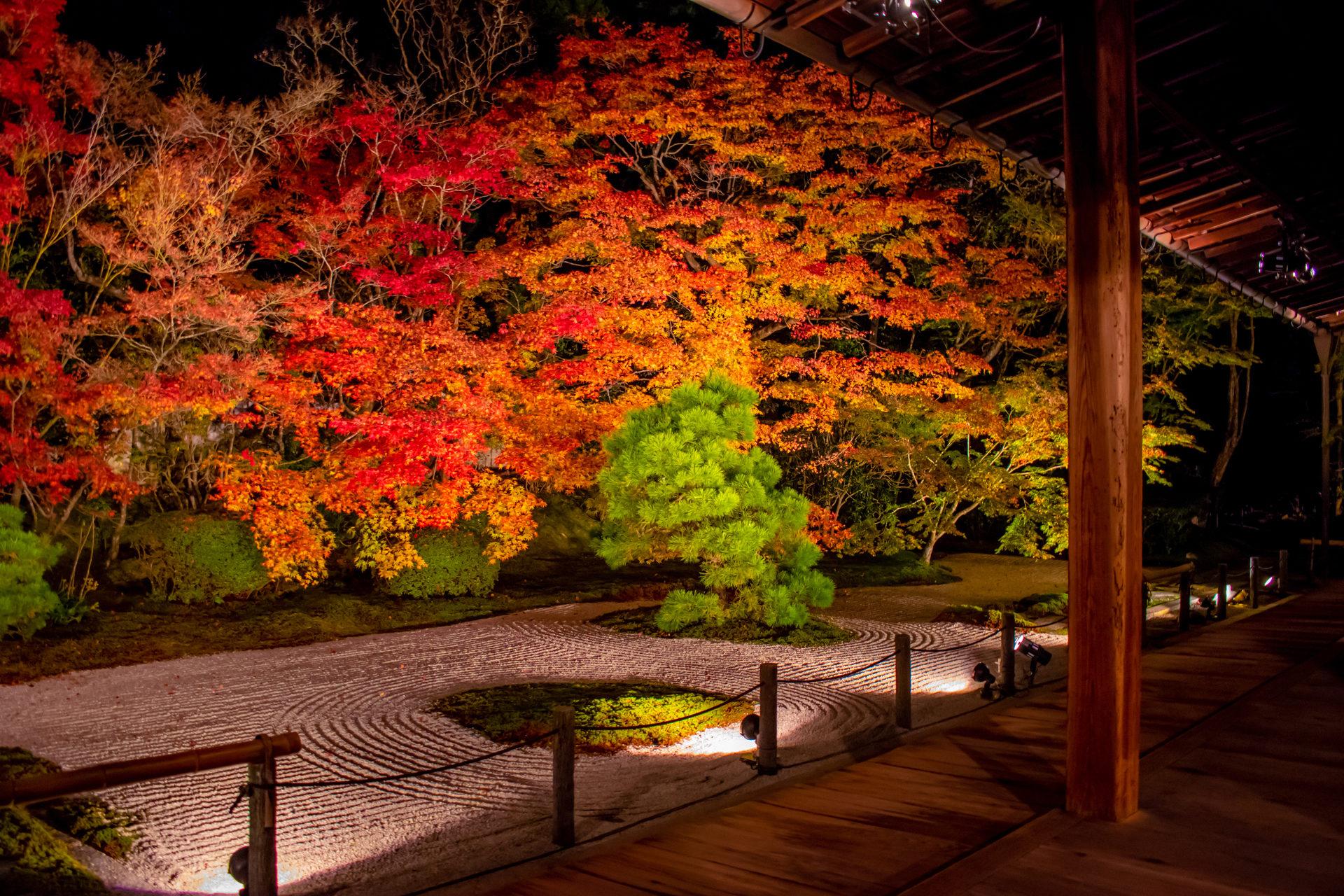 您不想在京都享受奢華的秋夜嗎?