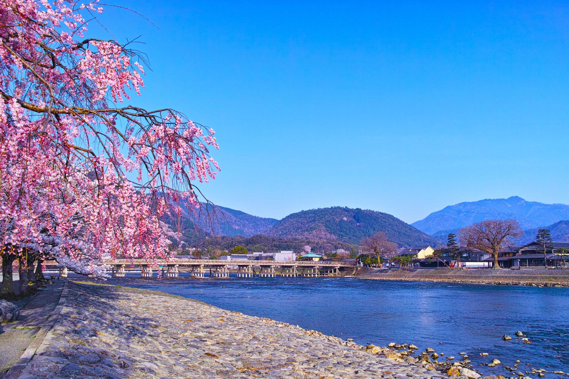 說到春天京都的約會地點就是這裡!
