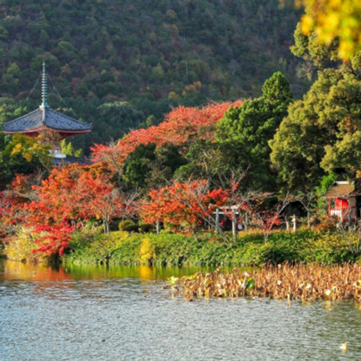 要不要試著接近大覺寺的歷史和魅力