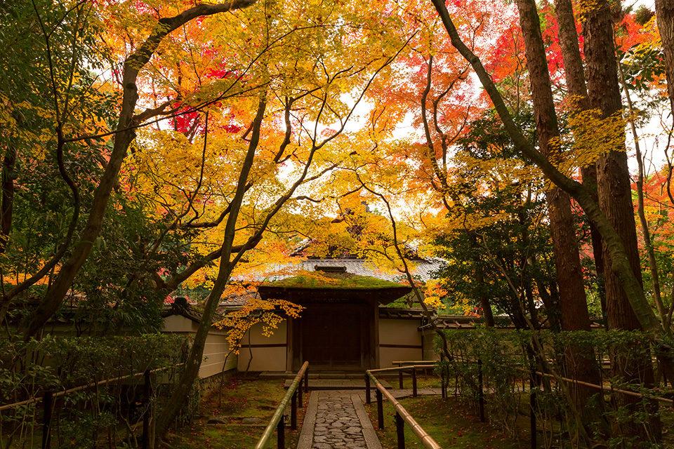 大德寺是日本的珍貴的寶庫