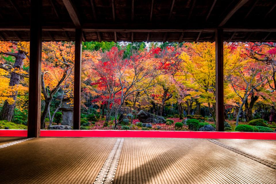 在圓光寺能看到的治癒景色和魅力是