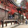 乘坐電車去的京都楓葉景點9選