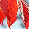 京都有12個可以免費觀賞楓葉的隱秘名勝