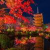 在夜間參觀能欣賞楓葉的8個鮮為人知的名勝