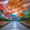 介紹京都的楓葉觀光景點。