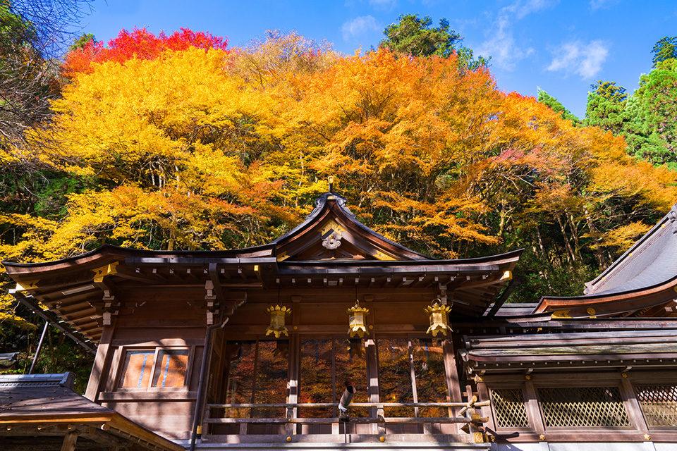 11月上旬在京都欣賞楓葉的10個景點