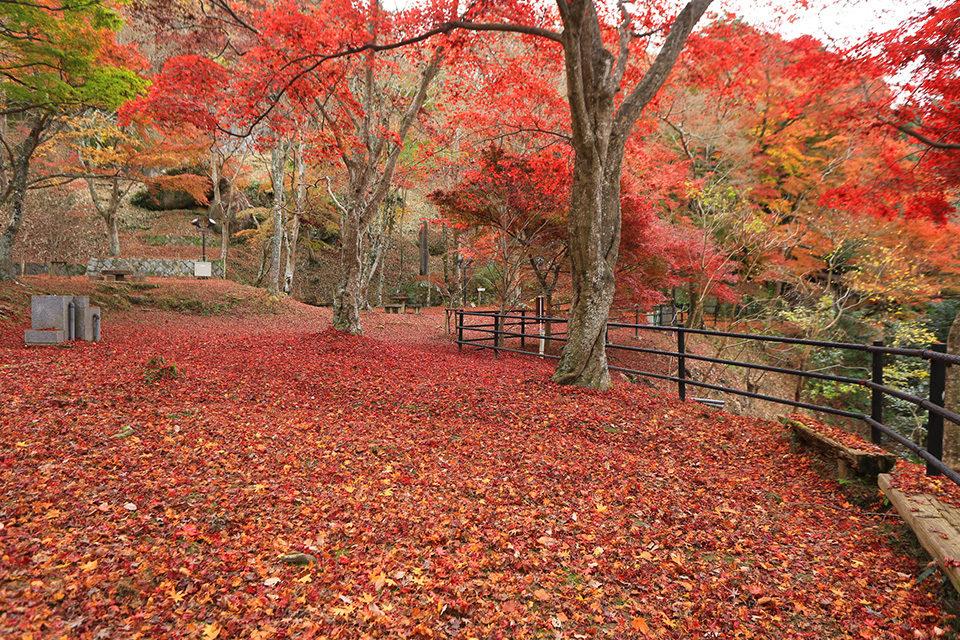在京都能看到紅葉的6個公園